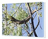 Canvas Print of Large lizard in a gumtree